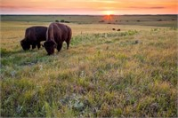Symphony in the Flint Hills 2016 Prairie Photography Auction