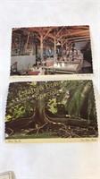 Lot of Thomas Edison Postcards