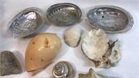 30 Plus Sea Shells, Coral, Starfish & More