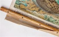 Audubon Soc. Antique Chromolithograph Bird Chart