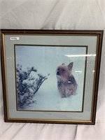 Framed Photo of Australian terrier playing in t