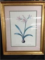 Amaryllis Vittata - Wall Portrait of Flowers