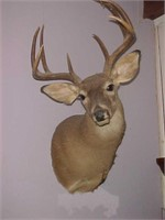 Taxidermy Auction - July 2019 Online Auction