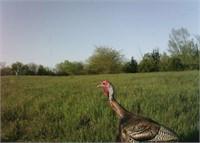 13+/- Acres on Turkey Ridge in Swainsboro, GA