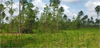 100+/- Acres on Turkey Ridge in Swainsboro, GA