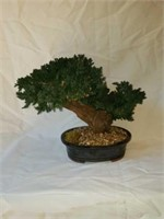 Beautiful Faux Tabletop Bonsai Tree
