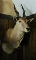 Exotic Taxidermy Auction