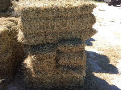 COASTAL MIX SQUARE BALES Other Items For Sale - 5 Listings