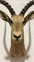 Impala Mount-