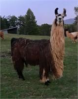 Pistachio Farms Online Auction