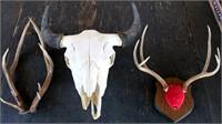 Antlers, Skull