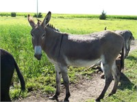Donkeys and more