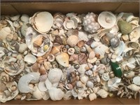 Shell Collection- Large Assortment