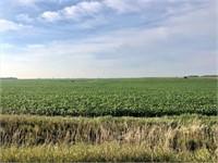 87.7 Surveyed Acres in Clay County, Iowa