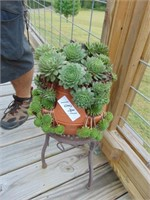 Plant Stand w/ Hen + Chick Planter