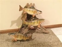 """Perch mount taxidermy 14"""" Fish & 12"""" on driftwood"""