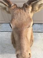 Elk- Taken in Wyoming. 12 point.