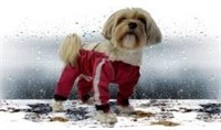 FouFou Dog 62556 Bodyguard Protective All-Weather
