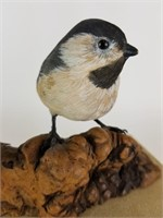 Black Capped Chickadee by Richard F Schepis