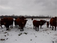 2019 CNY Beef Producers Fall Sale