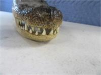 """8"""" Alligator Taxidermy Head"""