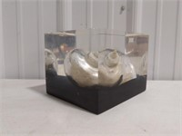 Decorative Shell encased in acrylic