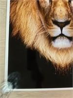 Metro Zoo Lion Poster