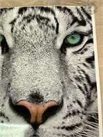 Metro Zoo White Tiger Poster