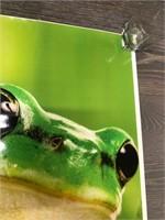 Metro Zoo Frog Poster