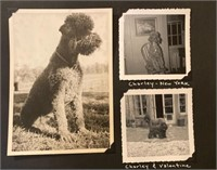 Photos of Charley John Steinbecks poodle from book