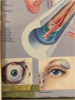 Poster of The Anatomy of the EYE