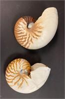 Nautilus Shells and Decorative Items