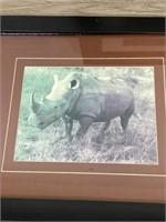 Group of Animal Photographs