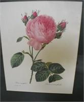 Three Botanical Prints