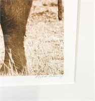 Giclee & 2 Wildlife Photos