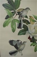 Roger Tory Peterson Mockingbird Print