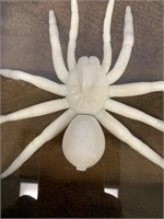 Shadow box containing stunning ivory tarantula, bo
