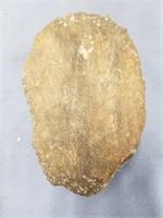"""Outrageous unprocessed trilobite fossil, 4.75"""" (M"""