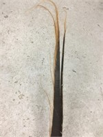 6 Ft. strip of polished Baleen in good condition