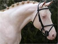 2020 Westfalen Stallion Service Auction