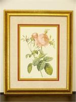 Pink Rose Framed Print Artwork