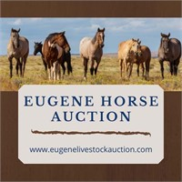 March 8th Horse Auction