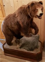 Taxidermy Online-only Auction