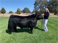 Butte County Fair Steer Auction