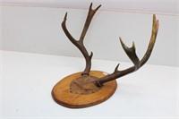 Deer Antler Mount Plaque