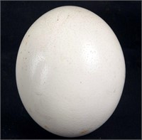 A Ostrich Egg found in the Wilderness