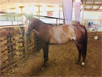 Spring Round Up Equine Auction