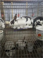 Small Animal Online Auction 4-10-20