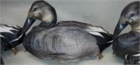A Dozen of Featherlites Self Inflating Duck Decoys