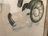 "Diane Coleman Artist Proof  ""Alaskan Dall"""